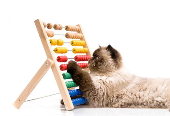 cat-on-abacus-istock-6939276